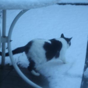 Poppy testing the snow